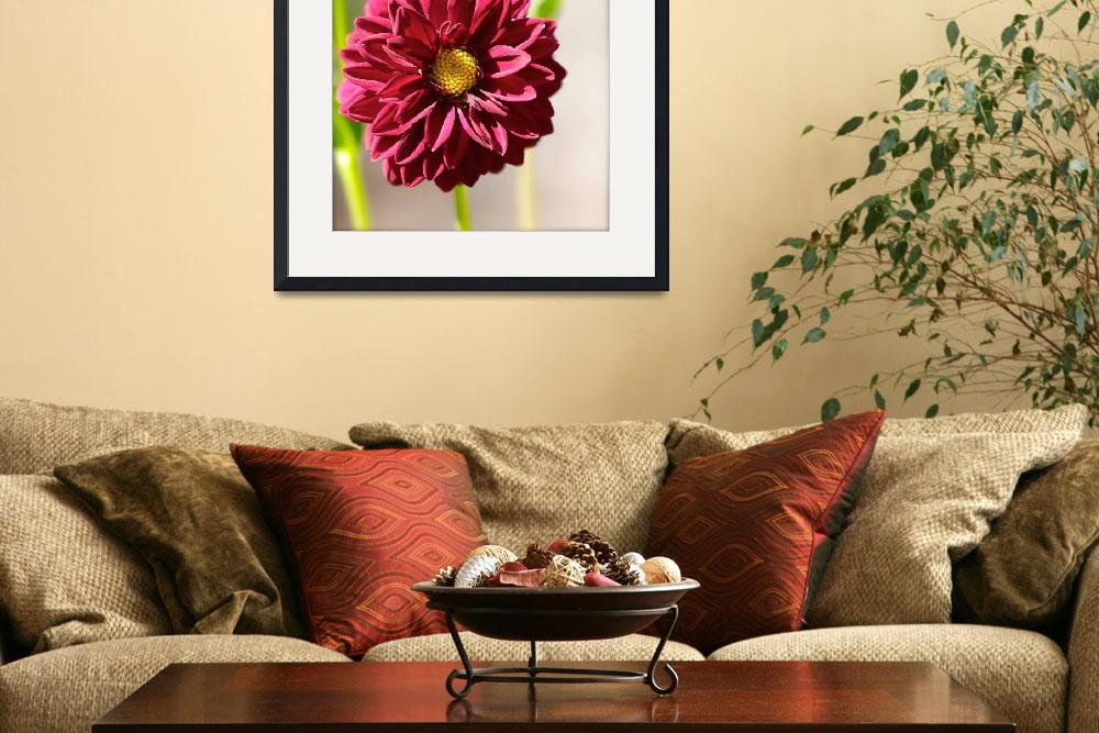 """Sizzling Summer Dahlia&quot  (2014) by Groecar"
