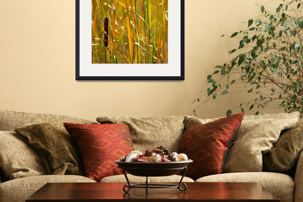 """Cattail Basking&quot  (2009) by FallingSilver"