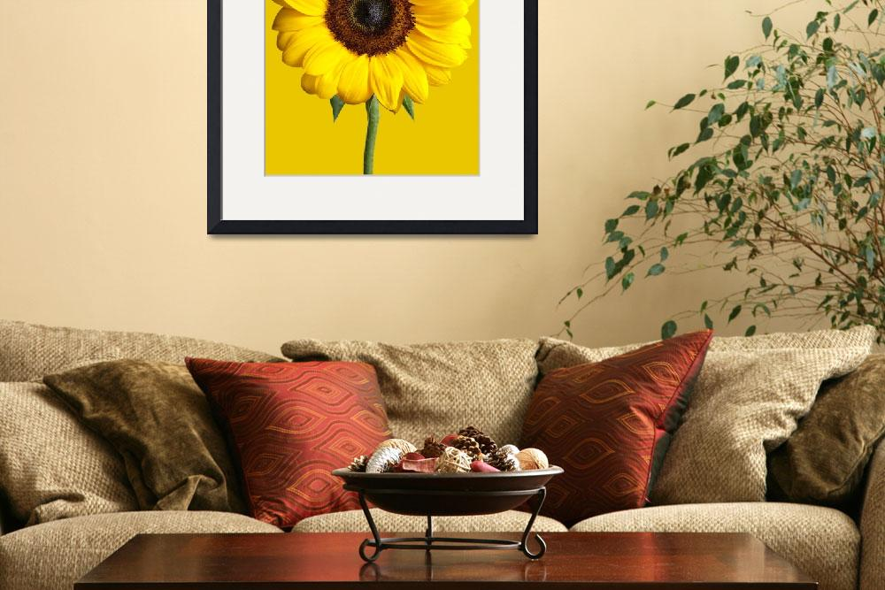 """Sunflower&quot  (2012) by keithtsuji"