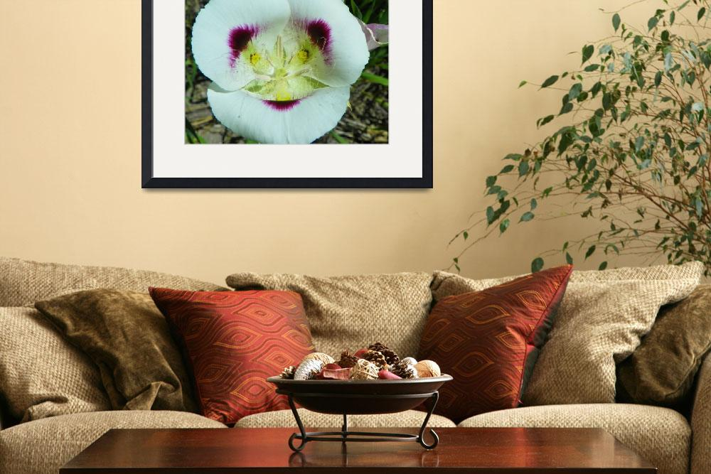 """Botanical - Mariposa Lily - Outdoors Floral&quot  by artsandi"