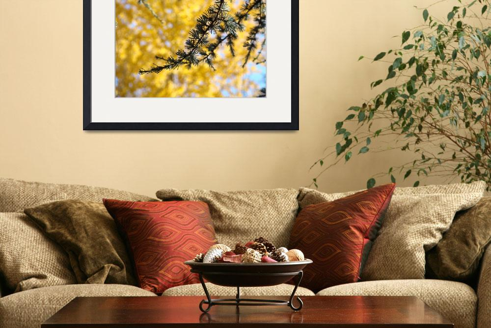 """Conifer Pine Tree art prints Yellow Fall Leaves&quot  (2011) by BasleeTroutman"
