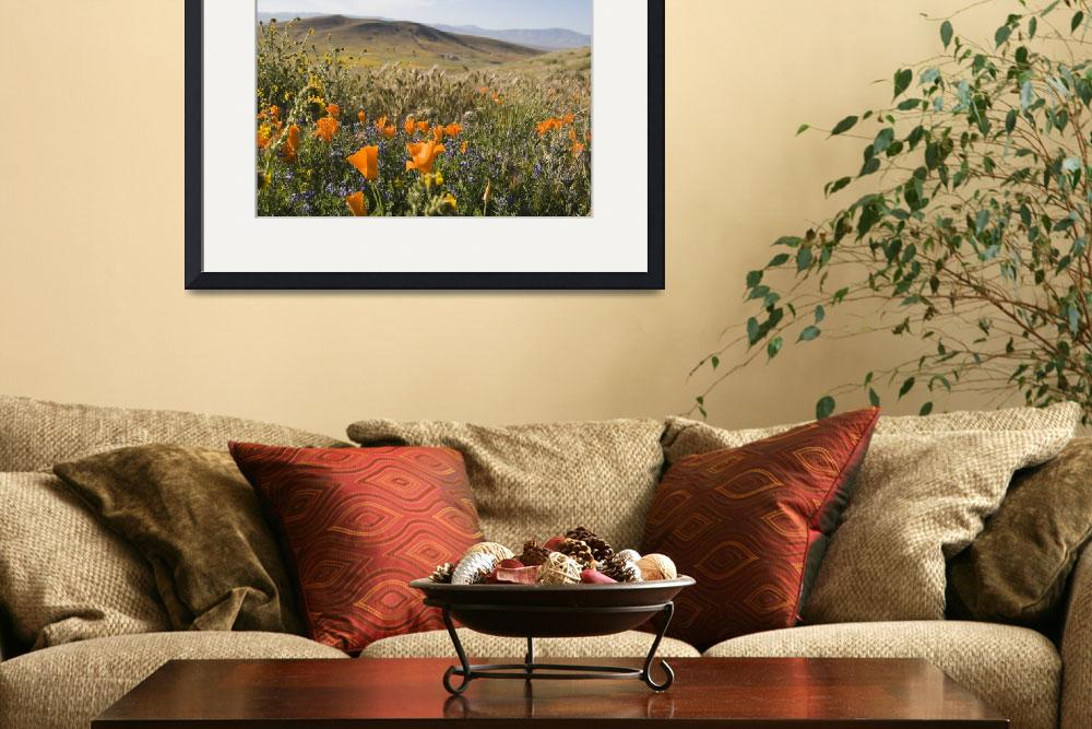 """California Poppies and Wildflowers&quot  (2009) by Eileen"