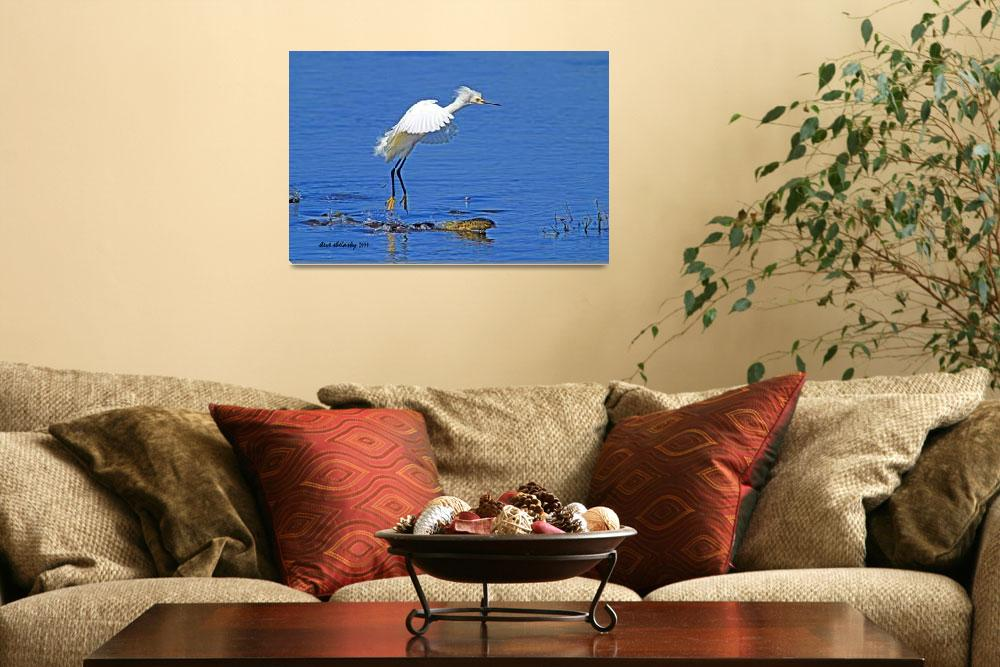 """Snowy Egret&quot  (2014) by shelshots"