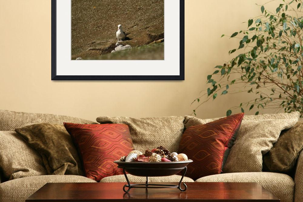 """Wide Shot Black Browed Albatross&quot  (2008) by MarilynsArt"