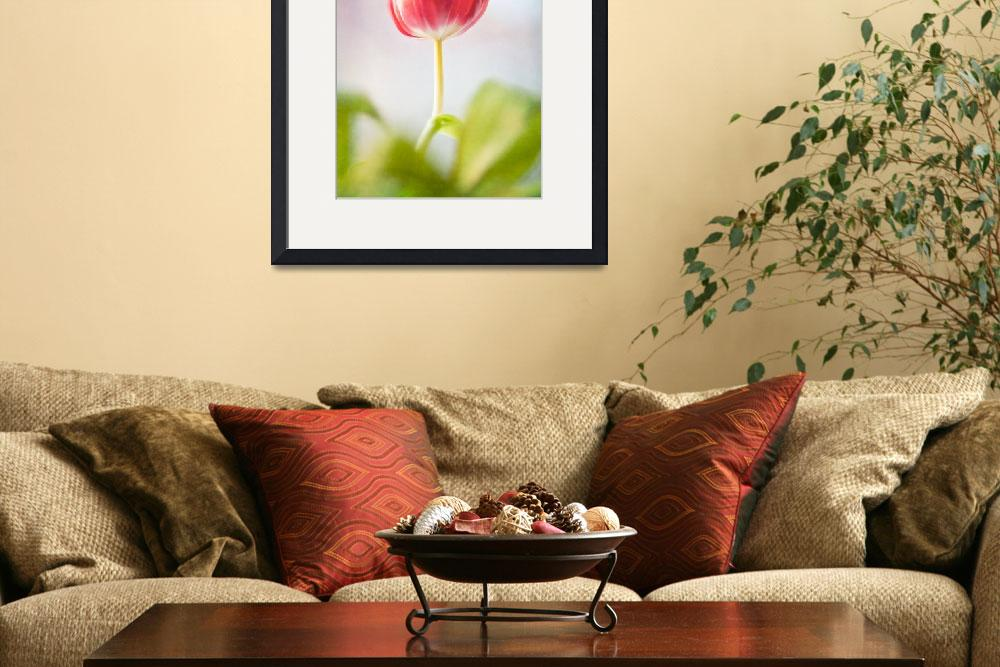 """Tulip in Window&quot  (2011) by SKCphotography"