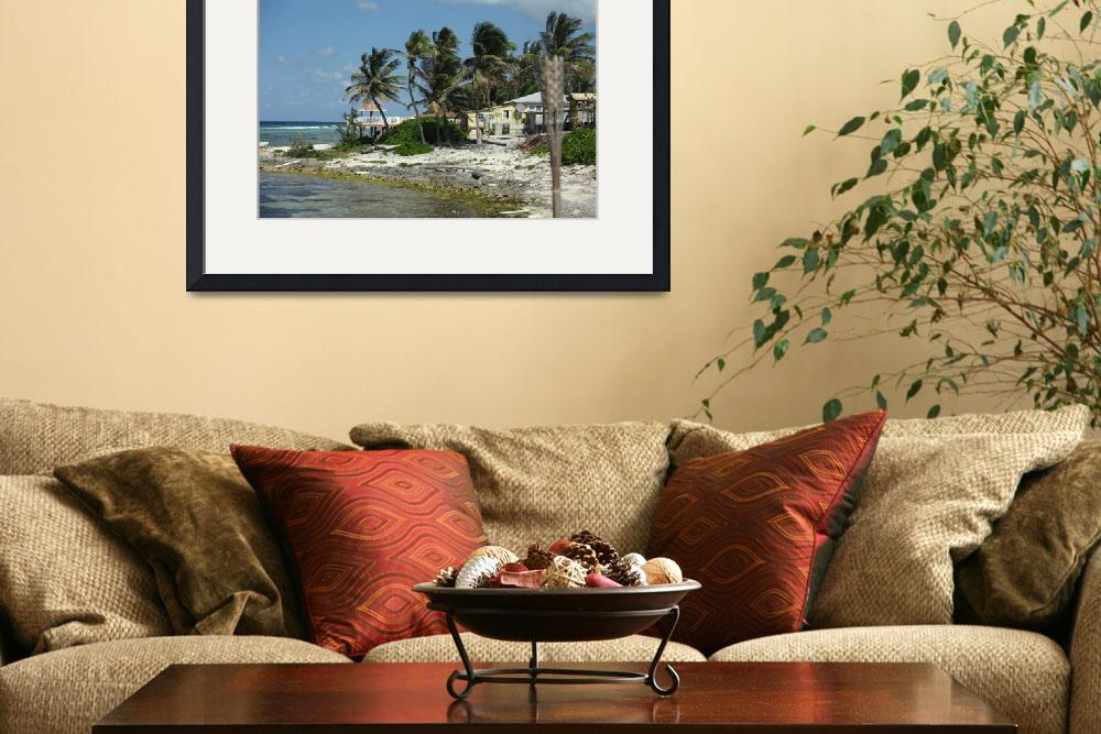 """Coastal Palms&quot  (2010) by constellationphotography"