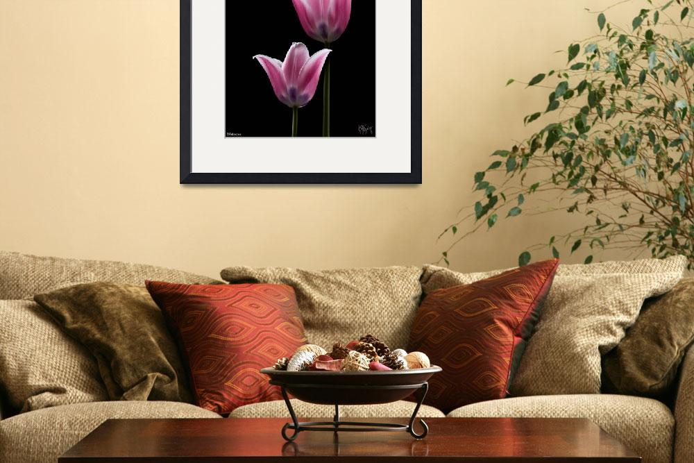 """PAIR OF TULIPS 2&quot  (2008) by katbusby"
