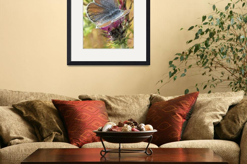 """Butterfly Love Collection (3 of 7)&quot  (2012) by WallArtDeco"