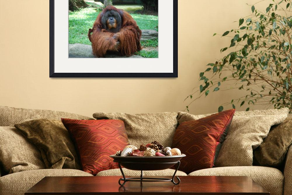 """The Old Orang Utan in Captivity&quot  by shreky"