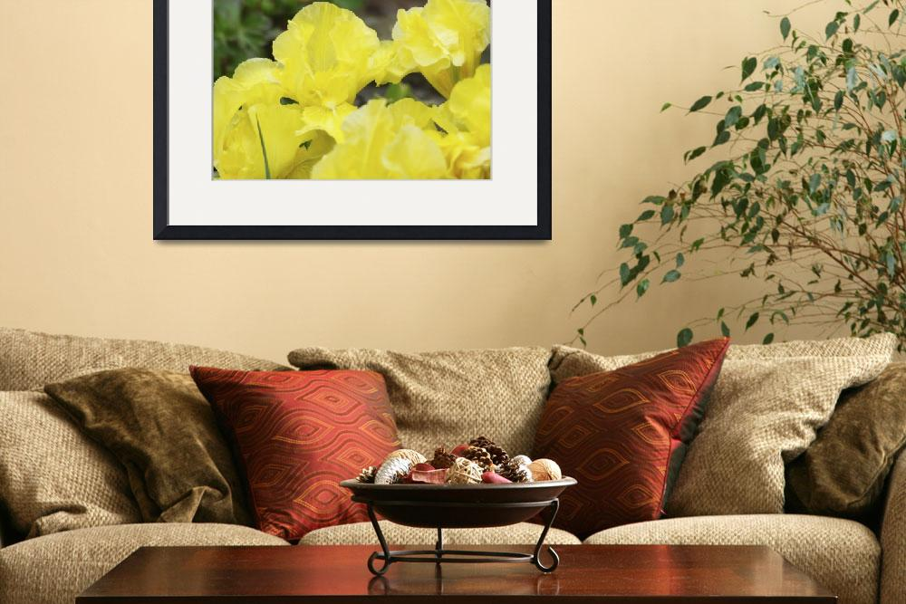 """Irises Yellow Iris Flowers Art Prints Floral&quot  (2013) by BasleeTroutman"