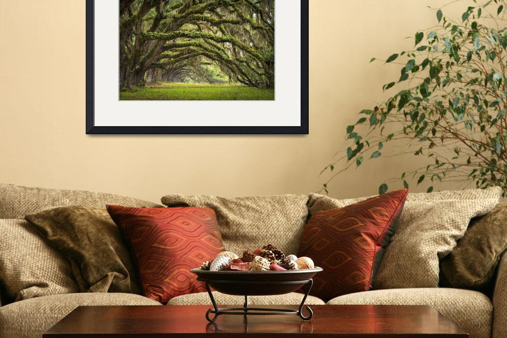 """Avenue of Oaks - Charleston SC Plantation Live Oak&quot  (2012) by DAPhoto"