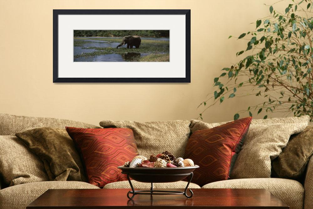 """African elephant Loxodonta africana wading in a l&quot  by Panoramic_Images"