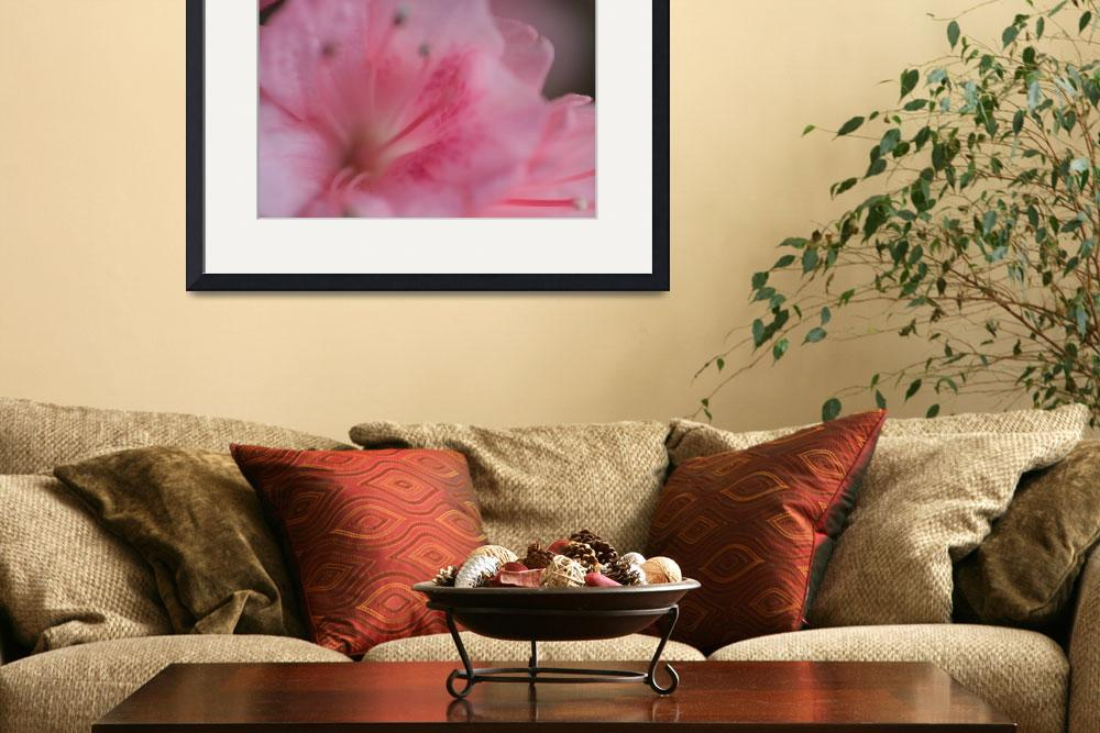 """Rhododendron&quot  (2011) by SouljournerPhotography"
