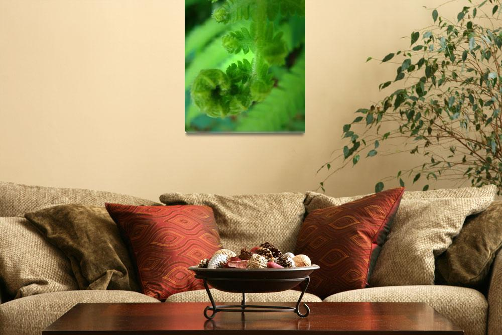 """Spring Fern&quot  (2012) by smsstudiosandphotography"
