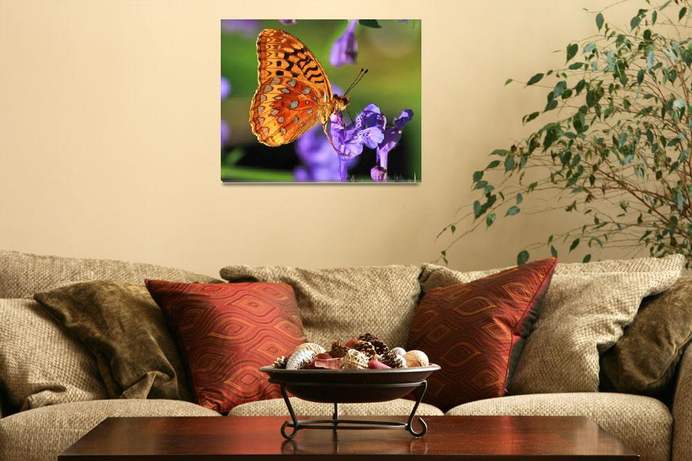 """Great Spangled Fritillary (Speyeria cybele)&quot  (2011) by shelshots"
