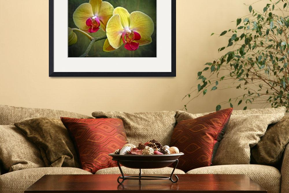 """Yellow Moth Orchid - Phalaenopsis&quot  (2013) by MotherNature1"