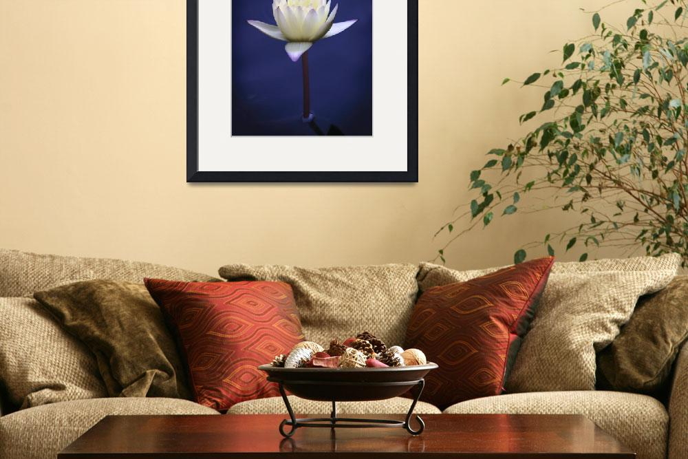 """Waterdrop Lily&quot  (2006) by FoxtowerPhotography"