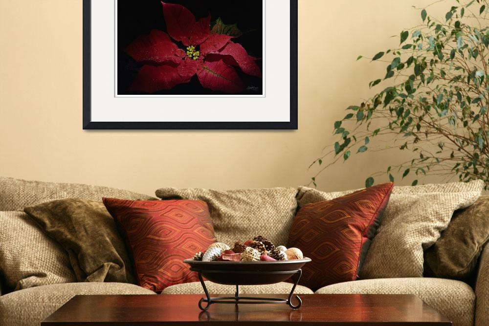 """artseeart Poinsettia Holiday Floral by georgia&quot  (2003) by artseeartgeorgiabrauer"