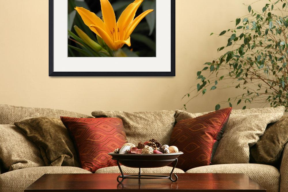 """Fairview Daylily&quot  (2005) by ravenfalls"