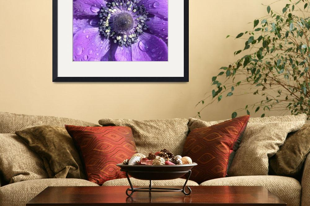 """Purple Passion Flower&quot  (2006) by Vince-McCall-Photography"