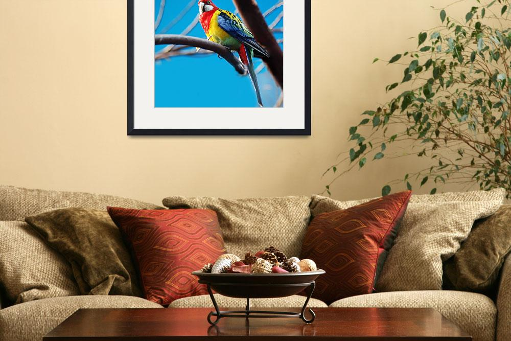 """eastern rosella parrot&quot  by BonnieRaw"