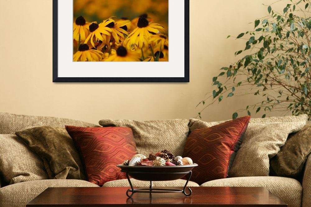 """Black-Eyed Susan&quot  (2010) by karlagarcia"