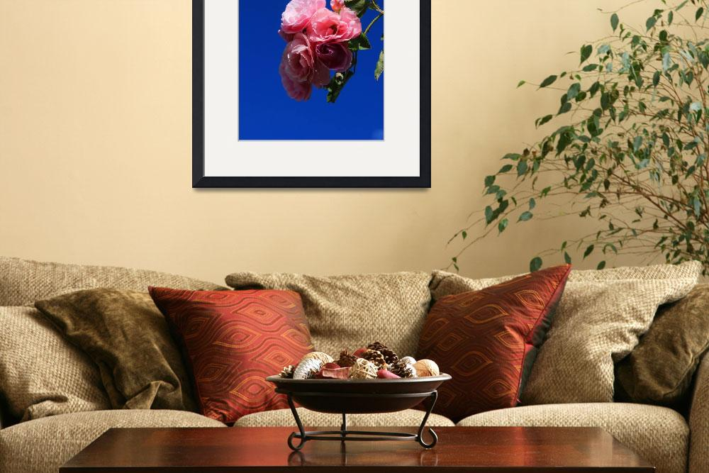 """Pink Roses Against Blue Sky&quot  (2015) by rhamm"