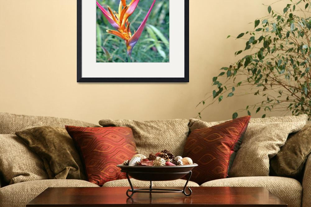 """COLORFULLY-ENHANCED HELICONIA&quot  (2007) by Karedesign1"