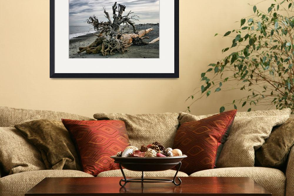 """washed up tree&quot  (2008) by PhotosbyTerrell"