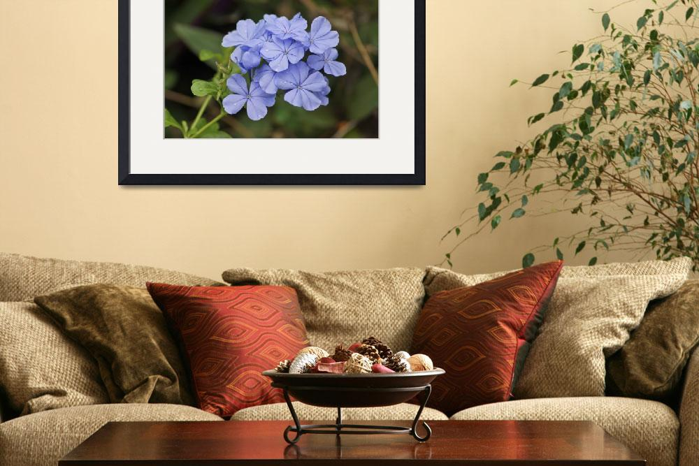 """Blue plumbago flower&quot  (2012) by URSPIX"