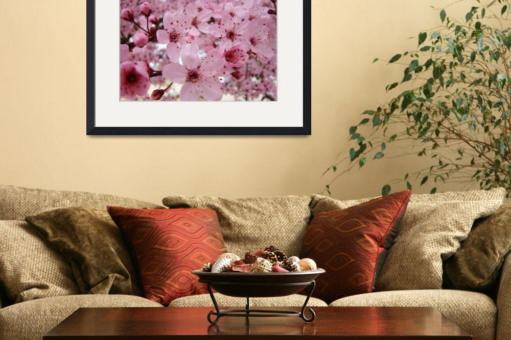 """BLOSSOMS Pink Tree Blossoms 62 Spring Flowers Art&quot  (2009) by BasleeTroutman"