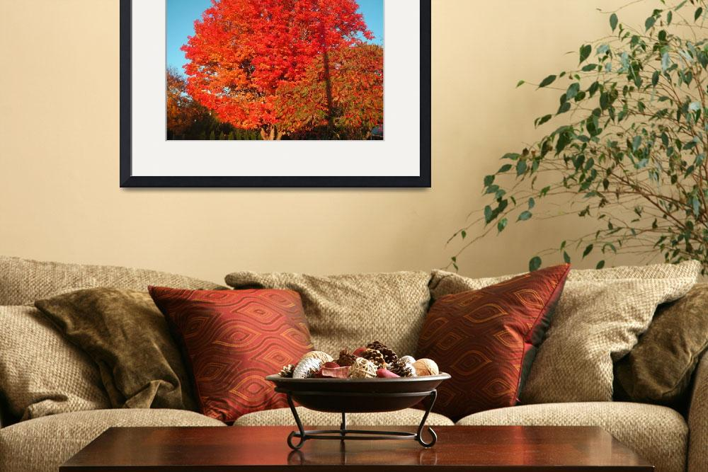 """Colorful Maple&quot  by garrykinney"