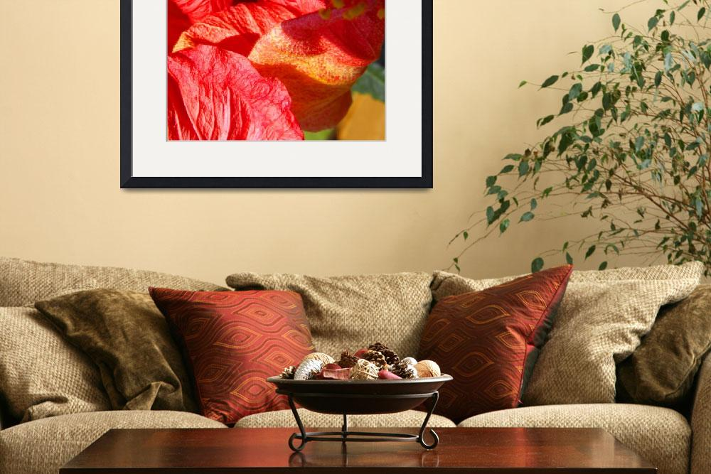 """Wilting Hibiscus&quot  (2010) by RuthPalmer"