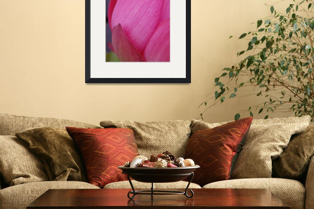 """pink lotus flower&quot  (2009) by nyc-naturephoto"