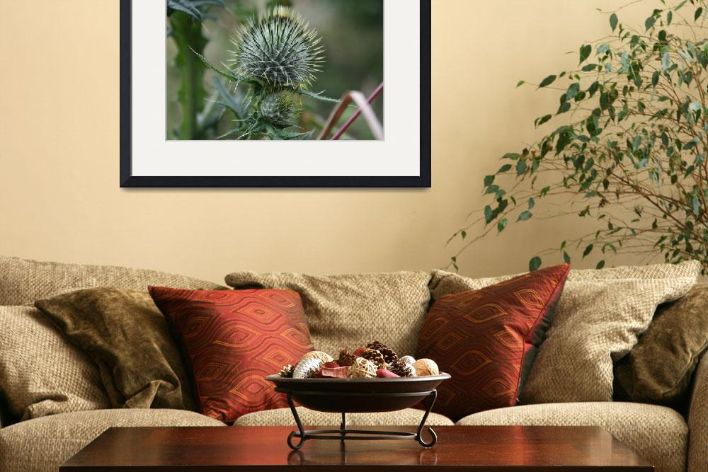 """Floral Thorny Thistle&quot  by willifindunow"