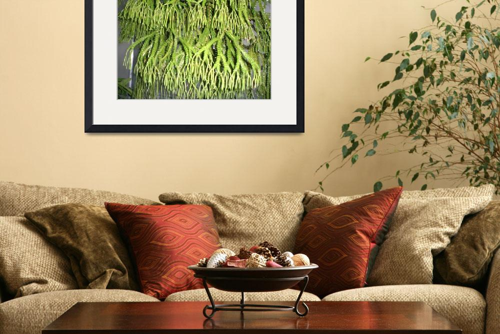 """Hanging Green Chandellier Plant&quot  (2008) by TanzilaShams"