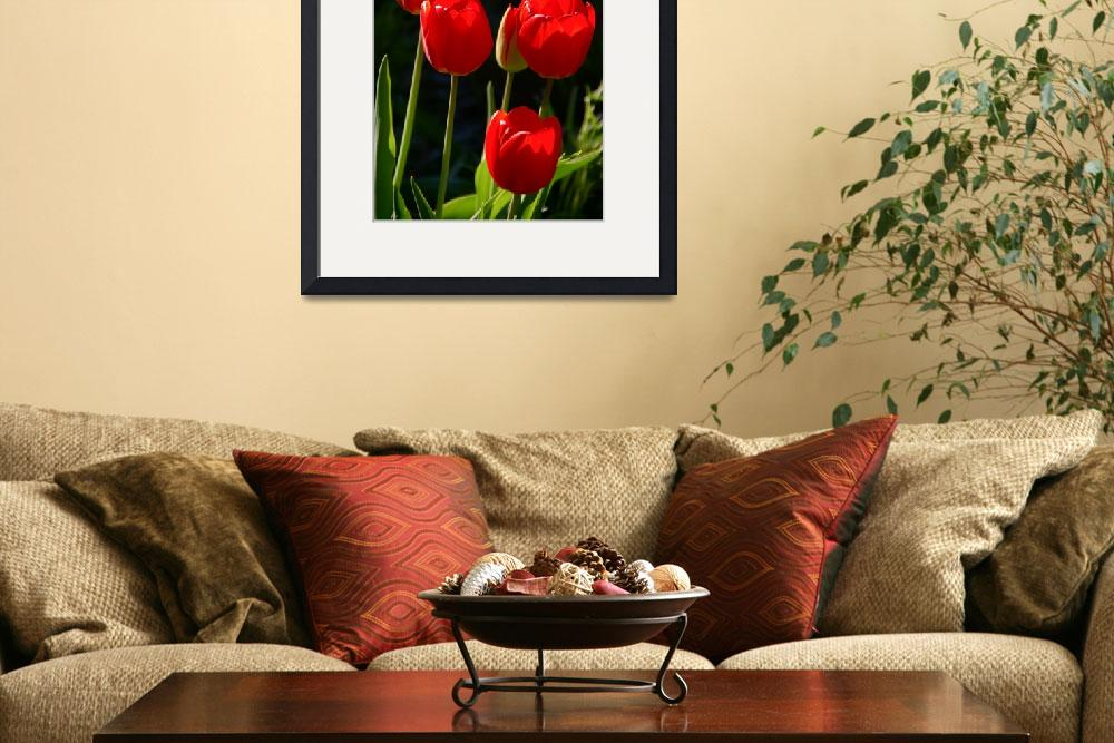 """Luminous Red Tulips&quot  (2010) by LightHeart"