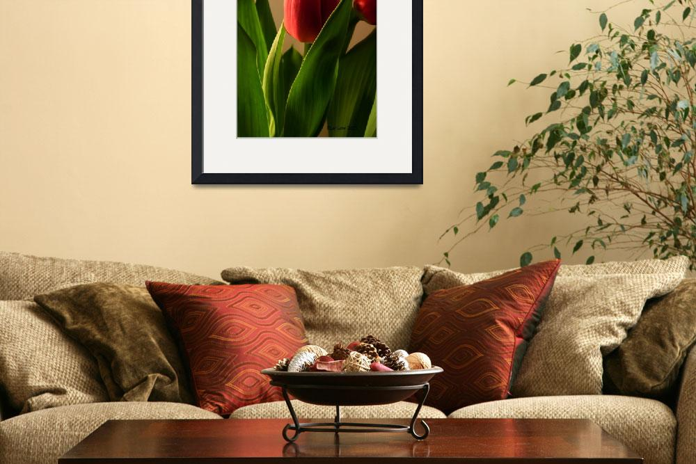 """Red Tulip Two&quot  (2011) by bleij50"