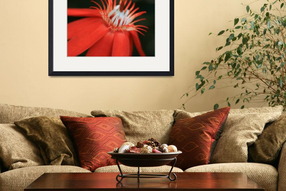 """Passiflora vitifolia - Scarlet Red Passion Flower&quot  (2012) by sharonmau"