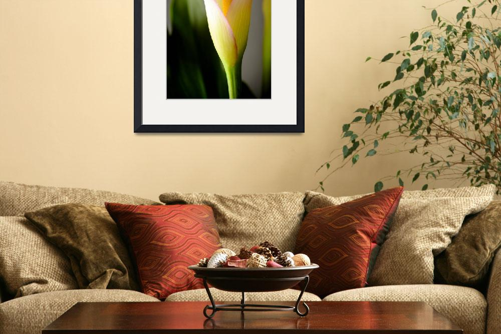 """Calla Lily 1&quot  (2012) by LauraD"