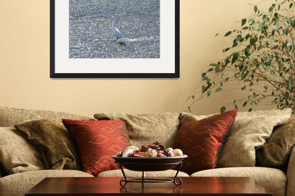 """Egret Fishing&quot  (2011) by GlendinePhotography"