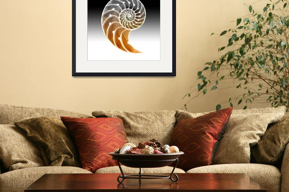 """Nautilus Shadow&quot  (2011) by izmetsdream"
