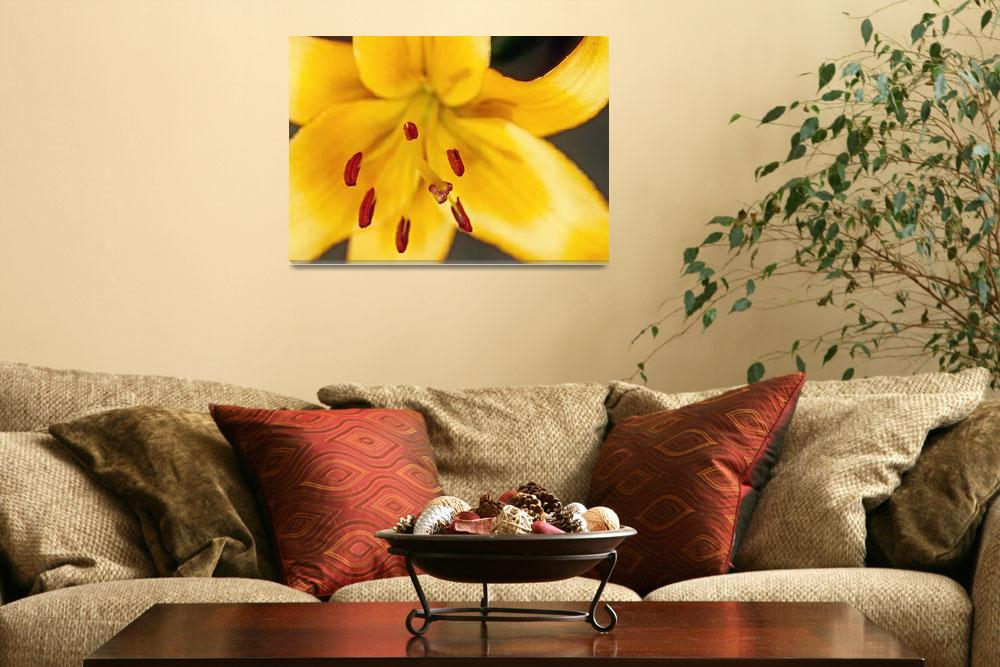 """Gold Daylily Flower&quot  (2003) by kphotos"