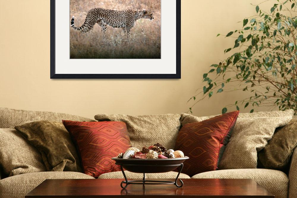 """Prowling Cheetah&quot  (2007) by stockphotos"