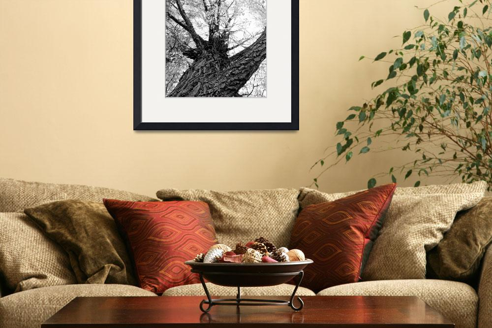 """Black and white Upward Tree View&quot  (2011) by lightningman"
