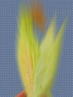 BLURRY CORN