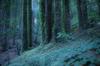 The Mystic Redwood Vines