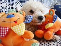 Dog and Teddy Bears