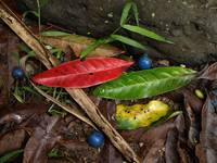 Rainforest litter