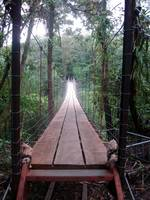 Bridge through the Jungle